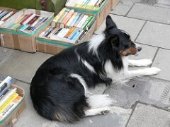 Dog selling books